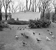 Y-590128-01.  War Memorial in Park Blocks, pigeons. January 28, 1959