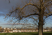 A 100 year-old ash tree bordering Ruskin Park and in the distance, Edwardian period homes and a London cityscape beyond, on 2nd February 2018, in south London, England.
