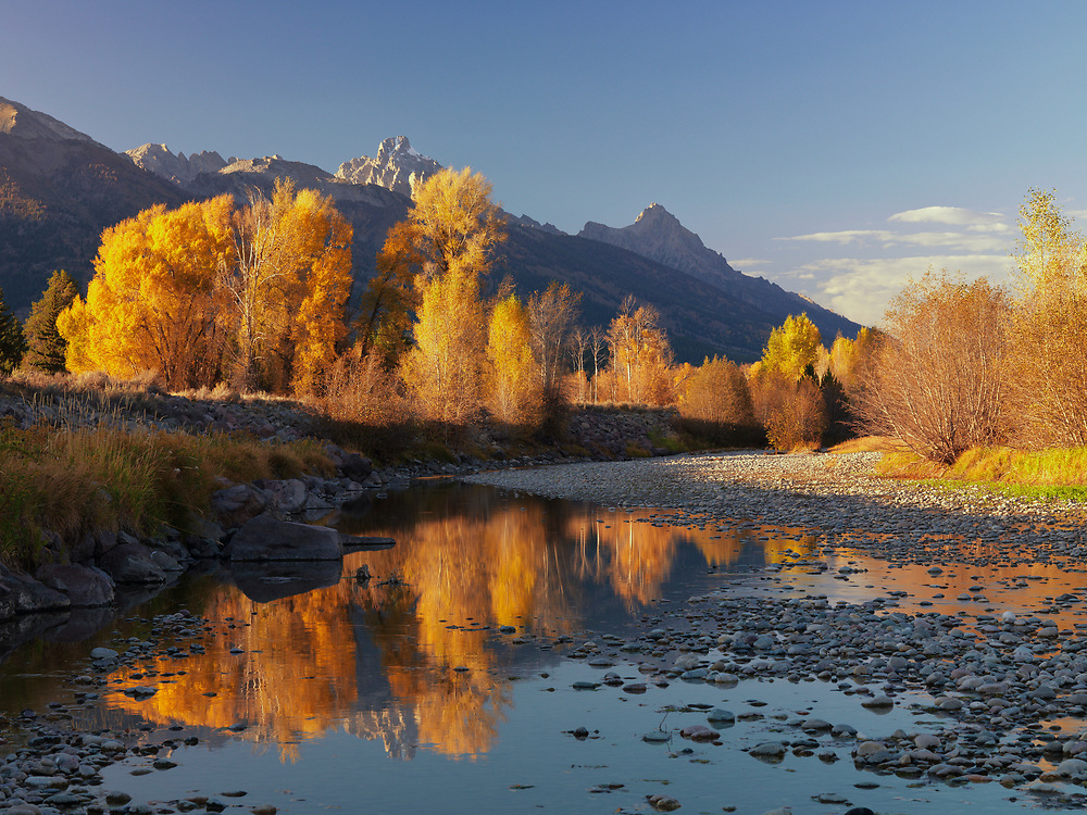 Open Edition Numbered Prints Aspens and cottonwood tree in Autumn gold from the side channel of the Snake River near Teton Village with the Grand Teton Peak catching the last evening light with reflection in water surface