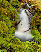 The upper reaches of Ridley creek was deep in a lush hemlock forest.  Moss covered the rocks and branches near the creek in a lush carpet of green.  The water tumbled over rocks and under logs and moss bridges.  I liked how the moss framed this particule cascade.