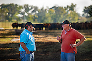 OQBN Livestock check