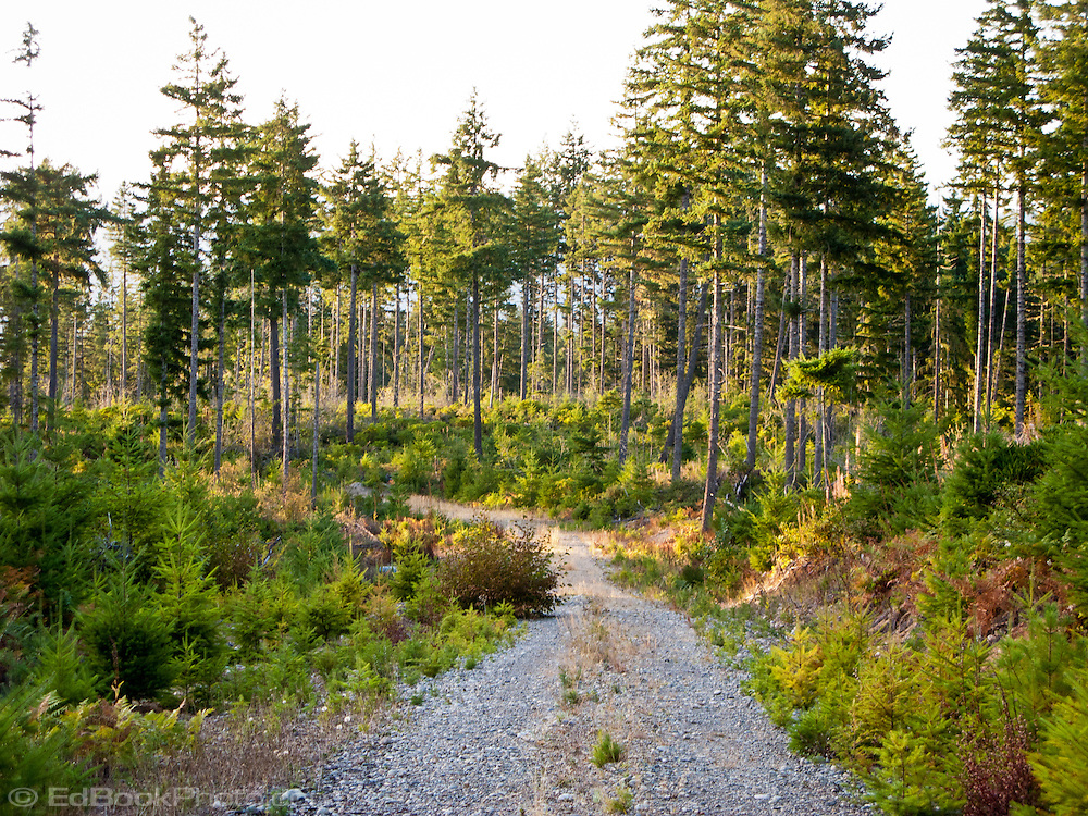 a logging road through a selectively timber clearcut on Washington state Department of Natural Resources (DNR) land on the Kitsap Peninsula in Puget Sound, WA, USA