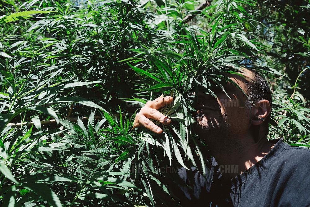 """Alvaro, coltivatore del Club di coltivazione Manga Rosa Social Club. <br /> """"Le piante vendute dallo Stato saranno coltivate da aziende scelte attraverso una vera e propria gara d'appalto. Aziende come il nostro club. Parteciperanno imprese estere e uruguayane, su ventidue candidate alla fine dell'anno ne rimarranno solo cinque. <br /> A Mujica contesto il fatto che ci tratti come malati o tossicodipendenti, perché non esiste la dipendenza da marijuana. Ma questa è una posizione generazionalmente conservatrice. La legge più forte dell'universo è l'inerzia...agire per mantenere tutto come è"""". Montevideo, 17 dicembre 2015.  Christian Mantuano / OneShot"""