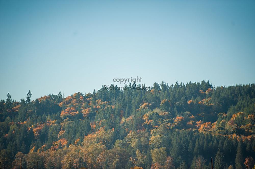 2017 OCTOBER 27 - Autumn mountain forest scene near Carnation, WA, USA. By Richard Walker