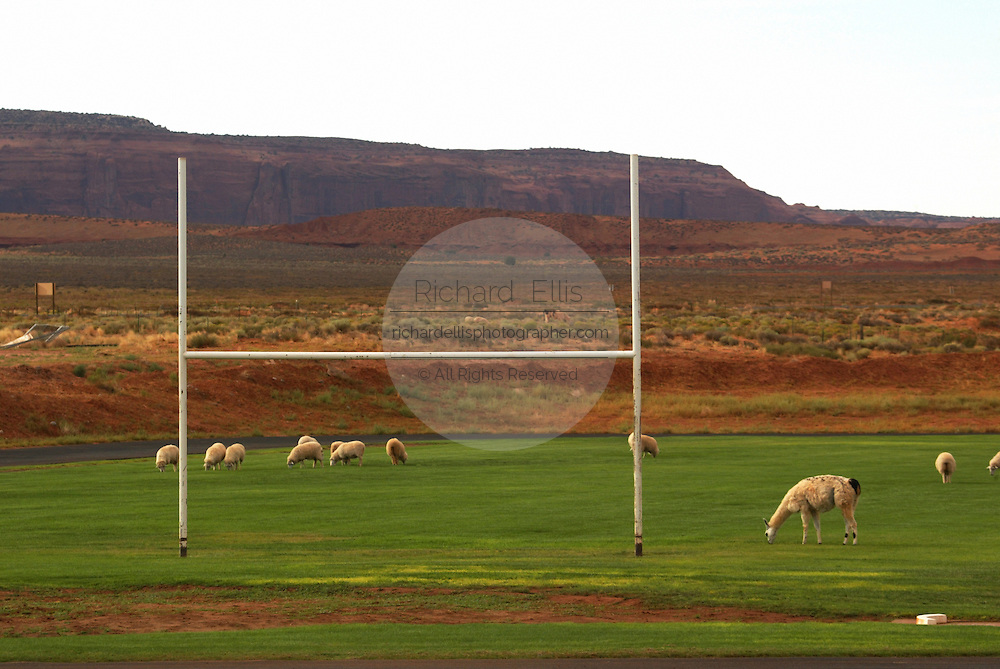 Sheep and llamas graze on the football field of Monument Valley High School in Monument Valley on the southern border of Utah with northern Arizona. The valley lies within the range of the Navajo Nation Reservation. The Navajo name for the valley is Tsé Bii' Ndzisgaii - Valley of the Rocks.