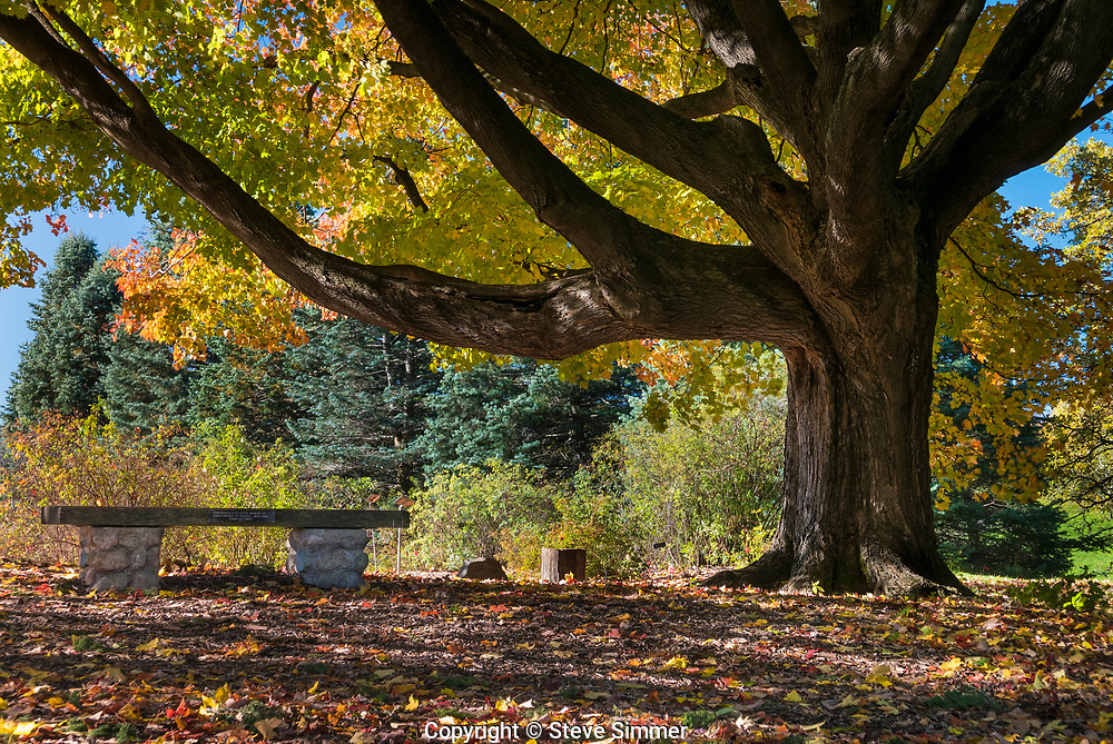 Sitting with this mighty maple at the Minnesota Landscape Arboretum made me feel small and temporary.