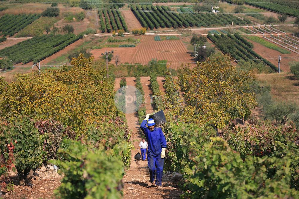 Vendimiador. La Rioja ©Daniel Acevedo / PILAR REVILLA
