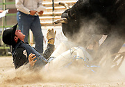 NEWS&GUIDE PHOTO / PRICE CHAMBERS<br /> Bullrider Cody Moucha of Cody is attacked by the bull he was just bucked off at the Jackson High School Rodeo on Sunday at Teton County Fairgrounds.