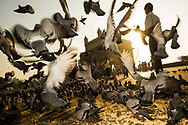 Low angle view of pigeons flying in front of the Gateway of India, Mumbai, India. The Gateway of India was built to commemorate the visit of the king and queen of England in the early part of the 20th century and has become a popular tourist attraction and a symbol of Mumbai.