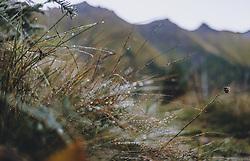 THEMENBILD - Gräser mit Morgentau. Wanderung auf das Imbachhorn in den Hohen Tauern, das zwischen dem Fuscher Tal und dem Kapruner Tal liegt, aufgenommen am 09. September 2020 in Kaprun, Oesterreich // Grasses with morning dew. Hike to the Imbachhorn in the Hohe Tauern, which lies between the Fuscher Valley and the Kaprun Valley, in Kaprun, Austria on 2020/09/09. EXPA Pictures © 2020, PhotoCredit: EXPA/Stefanie Oberhauser