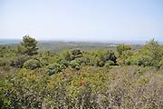 Israel, Carmel Mountain, Shekef Forest,