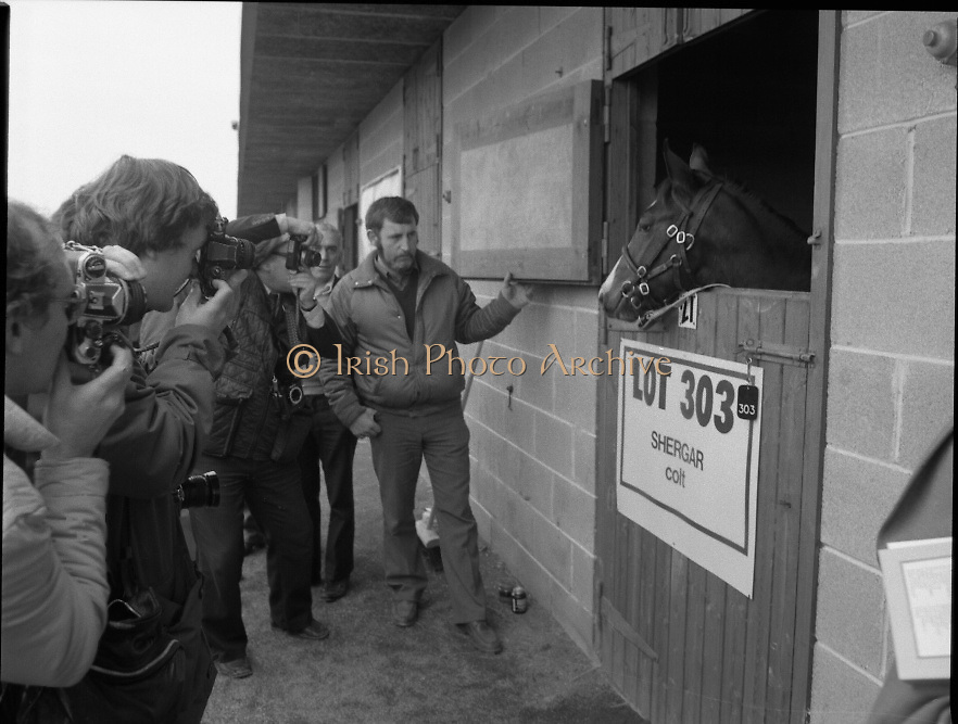 """Shergar Foal Sale.1983.20.11.1983.11.20.1983.20th November 1983..An,as yet,un-named foal  sired by the famous Shergar was on view for the first time today. The viewing was prior to the auction to be held at Goffs Sales,Kildare..The final images of the colt are taken just as an auction official prepares to close the stable door..Note; On the 8th February 1983,""""Shergar"""",was kidnapped from the Ballymany Stud,Curragh, Co,Kildare. the IRA were the alleged kidnappers. Shergar had been syndicated for £10million by the Aga Khan,his owner. Shergar had won the Epsom Derby by a record 10 lengths. The purported ransom was £2million. Despite a large investigation the horse had dissappeared and no trace of him was ever found. The story has been the subject of much controversy and has be much covered in books and film"""