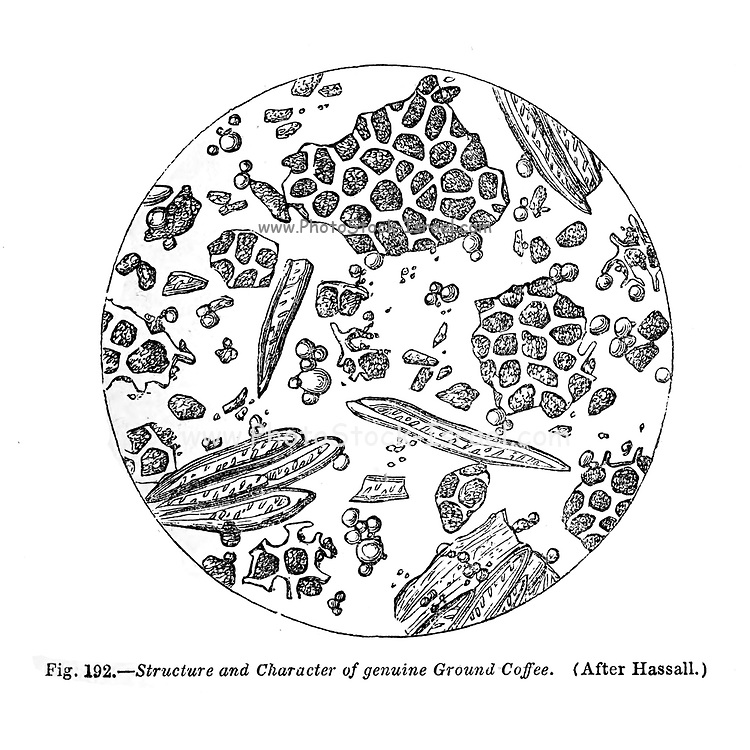 From the book '  The microscope : its history, construction, and application ' by Hogg, Jabez, 1817-1899 Published in London by G. Routledge in 1869 with Illustrations by TUFFEN WEST