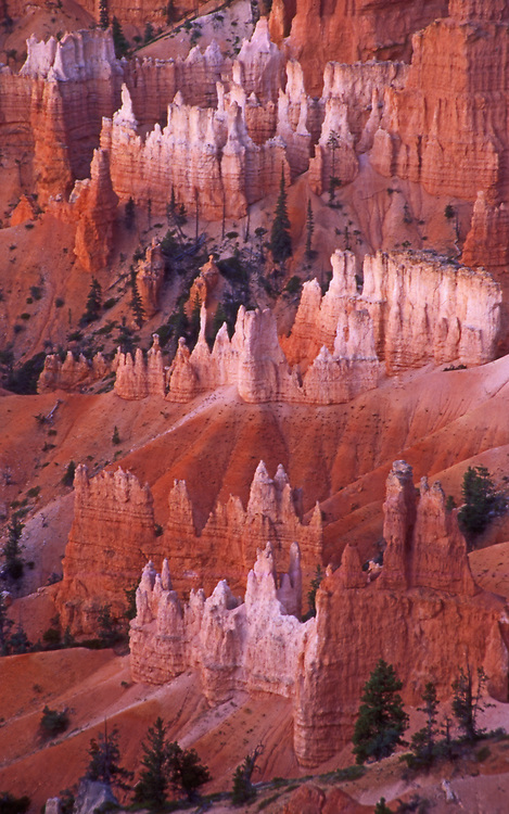 Cathedral formations, Bryce Canyon National Park, Utah