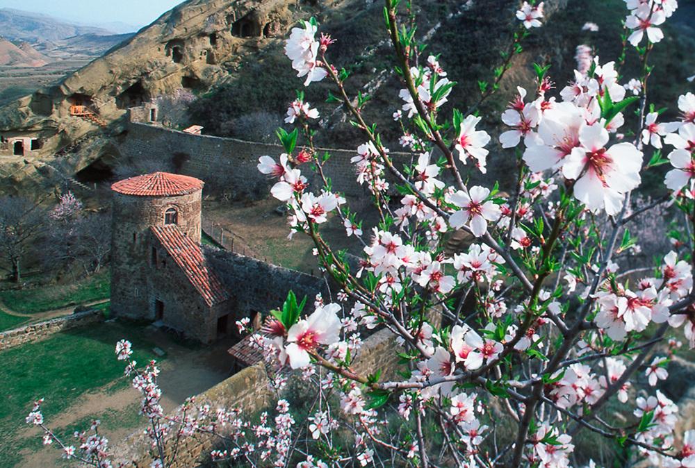 David-Garedja Monastery, apple blossoms, spring, Country of Georgia
