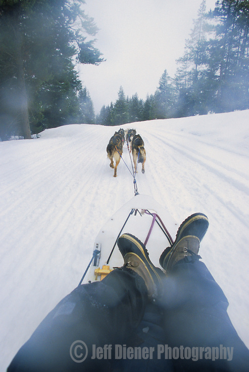 The view from a dogsled tour in Jackson Hole, Wyoming (Point Of View).