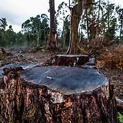 Tasmania - Deforestation