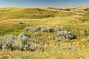 Sand dunes and vegetation<br /> Great Sand Hills<br /> Saskatchewan<br /> Canada