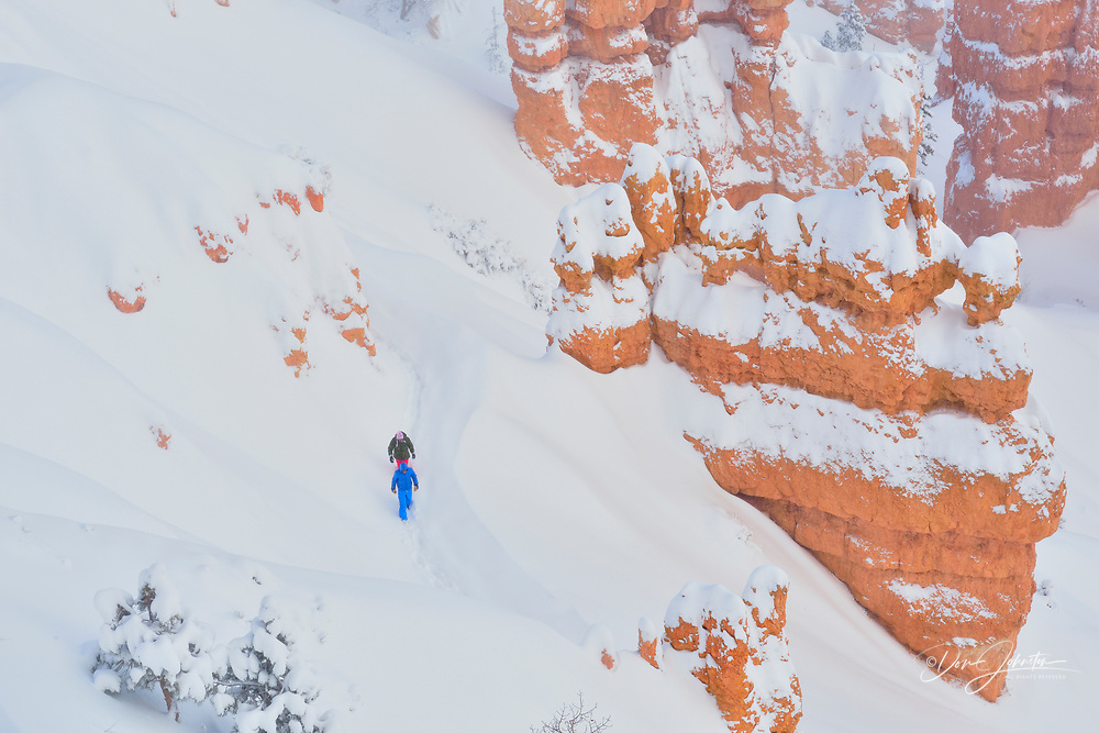 Fresh winter snow on the hoodoos from Sunset Point, Bryce Canyon National Park, Utah, USA