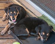 Culebra Rescue Pups - Dewey & Zoni