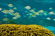Guam's Tumon Bay Fish & Inverts