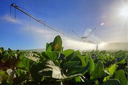 Pivô para irrigação em lavoura de soja. FOTO: Jefferson Bernardes/Preview.com