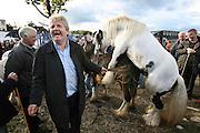 Facilitating a bit of Equine Matchmaking at Ballinasloe Horse Fair ,Co Galway,Ireland. Photograph by Eamon Ward