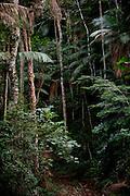 Ibatiba_ES, Brasil...Vegetacao em Ibatiba...Vegetation in Ibatiba...Foto: LEO DRUMOND / NITRO