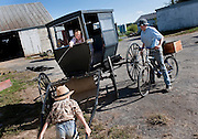 Old order Mennonite family Buggy washing and baking pies