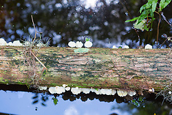 fungus covered tree trunk in the water of The Everglades