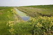 Drainage ditch draining wetland marshes at Alderton, Suffolk, England