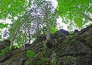 Clifton Gorge Nature Preserve, Clifton, Ohio<br /> Trees clinging to the cliffs