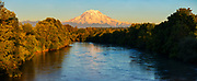 Mount Rainier towers over the Puyallup River, which three great blue herons are crossing, in this view from Puyallup, Washington, just before sunset. Mount Rainier, with an elevation of 14,411 feet (4,392 meters), is the tallest mountain in Washington and the highest volcano in the Cascade Range. The Puyallup River is about 45 miles (72 kilometers) long, beginning on the west slope of Mount Rainier and emptying into Commencement Bay, which is part of Puget Sound.