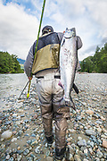 Lloyd Murray carries a chinook salmon back to camp for dinner. Dean River, BC