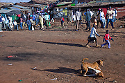 Dogs fight in dirt blackened by the burning of garbage in a tight-knit slum settlement in the Kibera slum in Nairobi, Kenya. Kibera is Africa's largest slum, with more than 1 million inhabitants.
