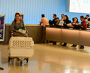 Natalie Mathiasen, a volunteer at the Yangon Animal Shelter, arrives at LAX from Myanmar with Bowie and Iman. March 10, 2016.