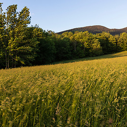 Evening light bathes a hay field in Jackson, New Hampshire. White Mountains.