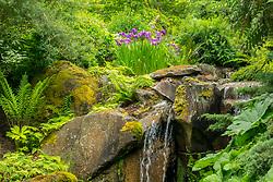 United States, Washington, Bellevue Bellevue Botanical Garden
