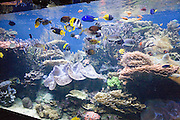 Waikiki Aquarium, Waikiki, Oahu, Hawaii