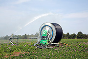 Water irrigation spraying watering potato field, Sutton, Suffolk, England