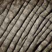 """Elephant Hide 2""                                              Tanzania<br />  See ""Elephant Hide 1"""