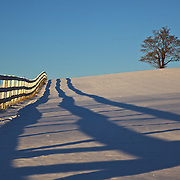 A lone tree and vanishing fence balance this winter scene along Hogeland Mill Road in Loudoun County, Virginia.