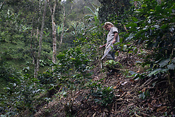 """Victor Manuel Pineda Granados, Aldea El Triunfo, Colinas, Santa Bárbara, Honduras. Victor is a coffee farmer and is a member of the COCASJOL cooperative. """"I have 4.5 manzanas, I've been affected by the landslides and quite a few trees that have fallen down, three of my big trees went down. With hurricane Mitch I was badly affected, in the same places, but I planted over the top again, but we aren't so good economically now, so I don't know, we'll see if we can recover from this somehow."""""""