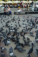 Pigeons at the Main Market Square in Kraków, Poland 2018.
