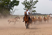 A Gaucho rounding up the horses on horseback, at a  Gaucho Estancia In Lujan, Argentina. .