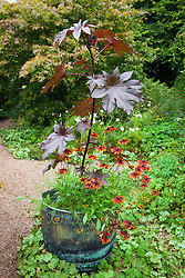Ricinus communis with Rudbeckia 'Rustic Dwarf' in a copper container at Glebe Cottage. Castor Oil plant