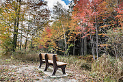 Bench amid fall color leaves. Cadillac Heritage Nature Study Area, William Mitchell State Park, Cadillac, Michigan, USA. Walk the pleasant 2.5-mile Heritage Nature Trail on boardwalks and packed limestone starting from Carl T. Johnson Hunting and Fishing Center, through old-growth hardwood forest then around an old dike system which retains rich wetlands.