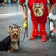 A Woman with crutches is getting a portrait with her Yorkshire Terrier at a dog exhibition in Prague. #prag #praha #prague #czechrepublic #dog #exhibition #dogshow #hund #portrait #hundeschau #tschechien #animal