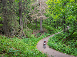 Mountain biker riding downhill through forest road, Hinterzarten , Baden-Wuerttemberg, Germany