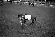 """30/06/1962 <br /> 06/30/1962<br /> 30 June 1962<br /> Irish Sweeps Derby at the Curragh Racecourse, Co. Kildare. View of the  parade in front of the reserved enclosure for the Derby. The horses were shown and mounted on the course. Horse is """"Larkspur"""" owned by Raymond R. Guest and trained by Vincent O'Brien. """"Larkspur"""" finished 4th in the Derby."""